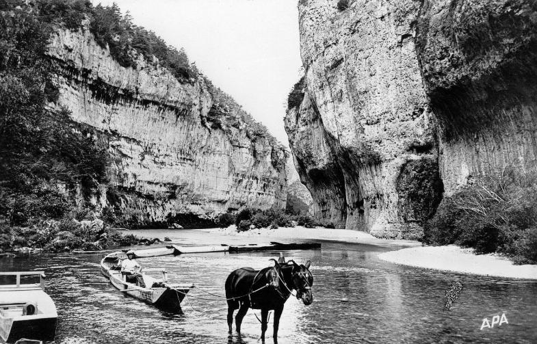 Un convoi de barques remonte le Tarn tiré par un cheval (3)